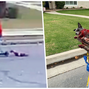 UPDATE: Latest On Woman Who Dragged Bloody Dog Behind Scooter Then Laughed About It