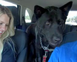 Homeless Dog Reunites With Long Lost Brother, Finds The Perfect Happy Ending