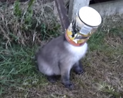 Helpless Creature Adorably Thanks Man For Freeing Its Head From A Can