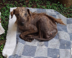 Woman Cries Because No One Would Help This Dog, Drops Everything To Save Him