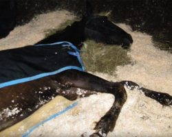 This Horse Was Abandoned And Left To Die, But Fate Had Other Plans