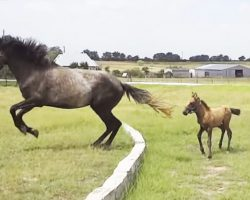 When This Baby Horse Can't Make The Jump, He Almost Gives Up. But When Mom Does This? Adorable!