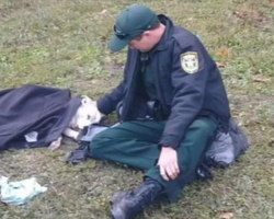 Police Officer's Act Of Kindness For Dog Hit By A Car Takes Over Social Media