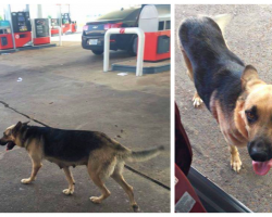 Mama Dog Was Dumped At Gas Station, And The Perfect Person Stopped To Fill Her Tank