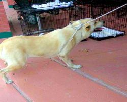 Scared Dog Cries As Family Drags Her By A Rope, Dumps Her At A High-Kill Shelter
