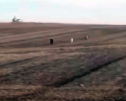 Man Finally Finds His Missing Dog Sprinting Across Field – Then Realizes He's Not Alone