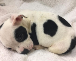 Pup Thrown Out For Being Different Just Wanted Someone To Love Him For Who He Is