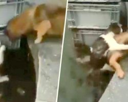 Heroic Puppy Dives In Water To Save Drowning Cat, Piggybacks Her To Safety