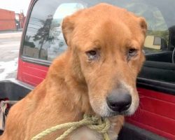 Senior Dog Abandoned By His Family, Found Depressed On Street And Begging For Food