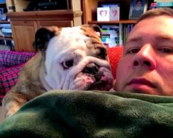Bulldog Sulks & Throws A Hilarious Fit When Dad Doesn't Let Him Get On The Couch