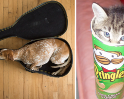 25 Pics Of Pets Fitting In The Darndest Places Possible