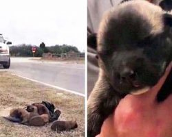 Authorities are looking for the culprit who tossed these tiny puppies out of car like trash