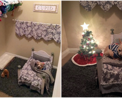 Dog-Mom Turns Closet Into Cozy Bedroom For Her Spoiled Senior Chihuahua