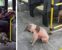 Bus Driver Breaks Rules — To Let Stray Dogs On His Bus During Thunderstorm