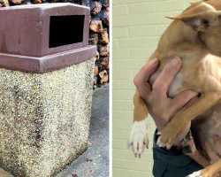 Scared Dog Found Shivering & Hungry After Being Dumped In A Trash Can In Rain