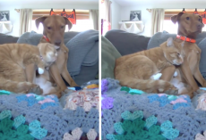 Cat Caught Comforting Dog With Anxiety When Left Home By Themselves