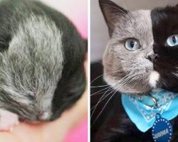 Rare 'Chimera Cat' Is Born With 'Two Faces', Grows Up And Becomes Famous For It