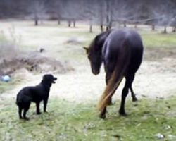 Dad Noticed His Lonely Horse Acting Unusual. He Never Could Have Imagined Who He Was Talking With!