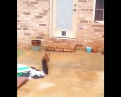 He spent the entire day making a cat door. Now watch the kitties first attempt to get through it.
