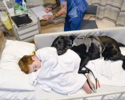Autistic Boy Scared Of MRI Scan, But Loyal Service Dog Won't Let Go Of His Side