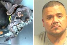 Dog Cruelly Duct-Taped & Dumped In A Cold Ditch, Police On Lookout For Suspect