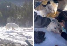 96 Days After Dog Disappeared, Mom Finds Paw-Prints In The Snow & Begins Search