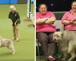 Rescue Dog's Agility Course Fail Has Everyone Watching In Stitches
