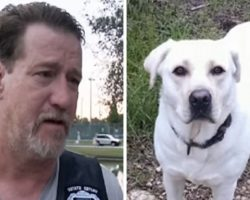 Neighbor Loses Vet's Service Dog While He's In The ICU, Massive Search Launched