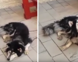 Lost Dog Has Identity Confirmed When He Starts Singing His Favorite Song