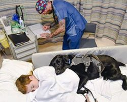 Loyal dog refuses to let boy go hospital without him