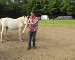 Man Captivates Horses With Native Flute