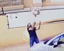 Camera catches the heroic moment a man rescues a dog falling 9 stories from balcony
