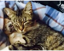 Tiny Pup's Mom Gets Hit By Car, They Look To A Mother Cat To Save Him