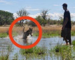 He saved a lion cub from certain death – now watch their reunion 4 years later