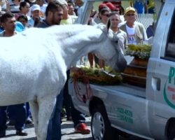 Devastated Horse Cries At His Owner's Funeral, Refuses To Leave The Casket Side