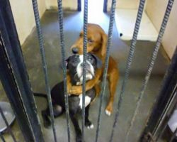 Terrified shelter puppy hugs her best friend and ends up saving both their lives