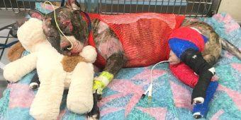 Dog Dies After Being Cruelly Set On Fire, $25,000 Reward Set On Culprit's Head