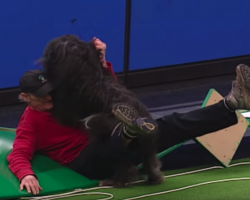 Dog Crashes Into Dad And Brings Down The House During Agility Run