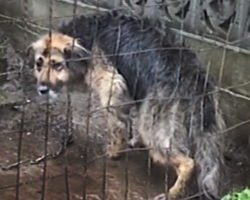 Owners Chained Dog In The Mud For A Decade, Then Got Offered $50 To Put Her Down