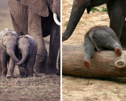 20 Adorable Baby Elephants To Make Your Day
