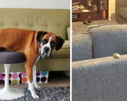 22 Pets Who Can't Quite Figure Out Their Humans' Furniture
