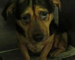 Couple Sees The Saddest Dog Photo And Adopts, Despite Warnings From Shelter