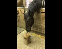 Camera captures moment when giant horse meets a small puppy