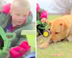 Abandoned Dog Pays Back His Rescuers, Protects Their Lost Toddler From Harm