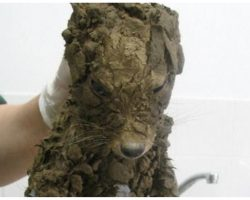 "Construction Crew Finds ""Muddy Puppy"" In Hole, Turns Out They Were Totally Wrong"