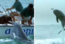 Dolphin Jumps Up To Kiss The Dog Then Does A Little Happy Dance