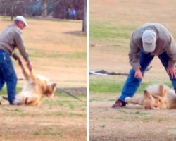 Dog Loves The Park Too Much, Gives Dad A Hard Time When It's Time To Leave