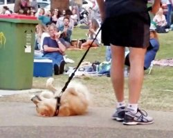 Park-Goers Erupt In Laughter When Stubborn Pup Refuses To Leave With His Dad