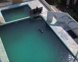 Defunct Aquarium Shuts Down, Staff Cruelly Abandon Dolphins, Penguins, And Fish