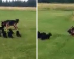 Over-Excited Pups Drove Mom Crazy 'Til She Came Up With A Hilarious Solution